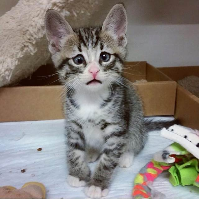 This Is Bum, The Kitten Born With Forever Worried Eyes Who Already Stole The Internet's Heart