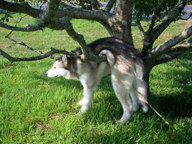 16 Animals Who Got Stuck But Keep Pretending Everything's Ok. #5 Crac