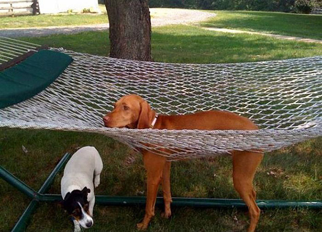 16 Animals Who Got Stuck But Keep Pretending Everything's Ok. #5 Crac