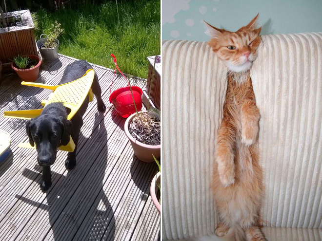 Pets Who Got Stuck But Kept Pretending Everythings Ok - 26 pets who got stuck but keep pretending everythings ok 5 cracked me up