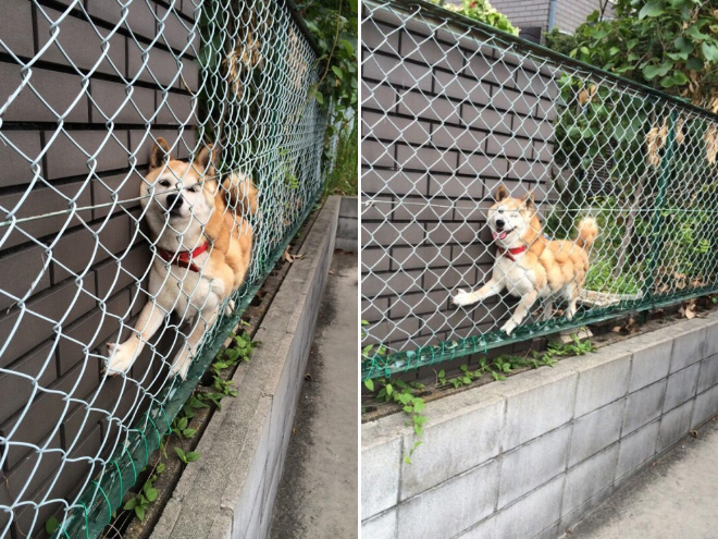 16 Animals Who Got Stuck But Keep Pretending Everything's Ok. #5 Cracked Me Up!