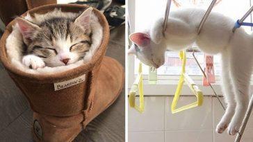 cats-sleeping2