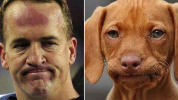peyton-dogs