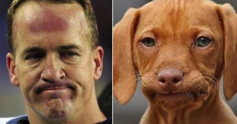 10 funny photos of dogs looking exactly like peyton manning 6 is 10 funny photos of dogs looking exactly like peyton manning 6 is just perfect voltagebd Image collections