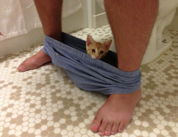 20 Cats Who Couldn't Care Less About Your Personal Space. #10 Is The Best Ever!
