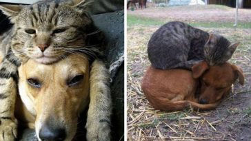 cats-dogs-pillows