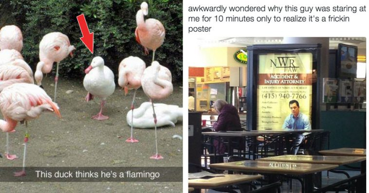 Hilarious Pictures That Will Make Your Day Instantly Better - 24 hilarious pictures will make day instantly better 9 best ever