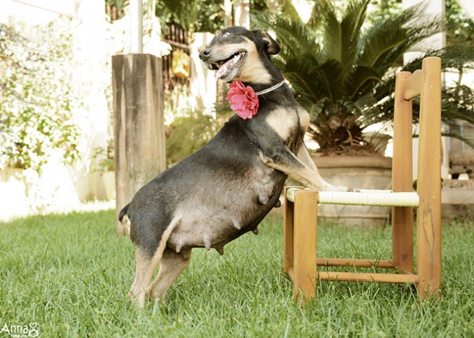 Photographer Takes Pictures Of Pregnant Dog In The Cutest Maternity Photoshoot Ever