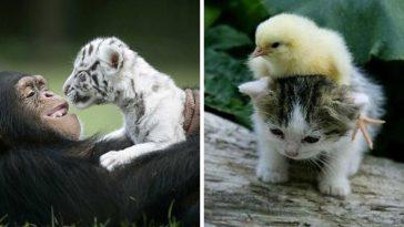 animal-world-better-place