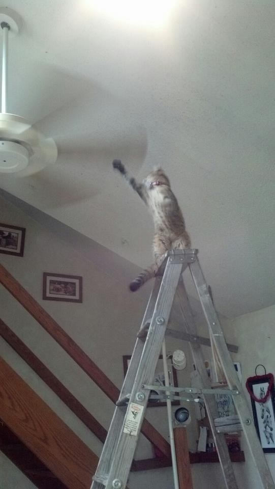 26 Things That Will Only Happen To Cat Owners. #8 Is Just Hilarious.