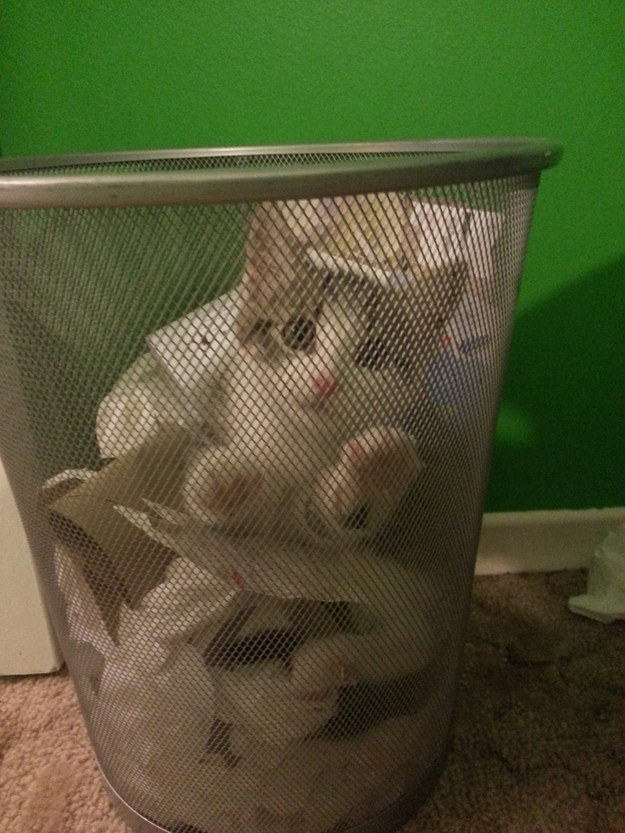 26 Things That Will Only Happen To Cat Owners