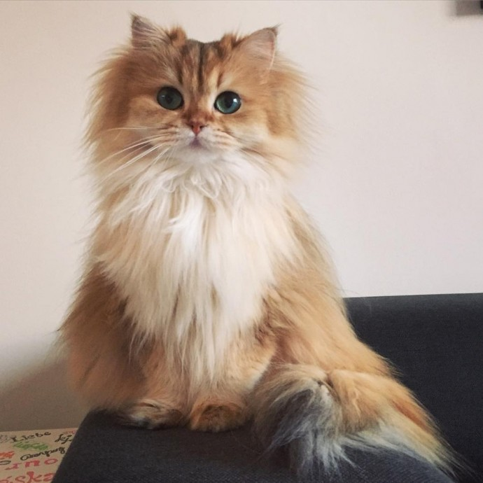 This Is Smoothie, The World's most Photogenic Cat