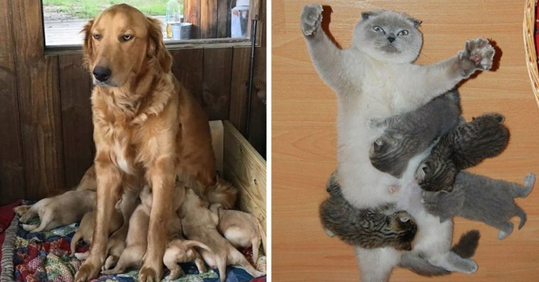 16-animal-pictures-perfectly-depicts-like-parent