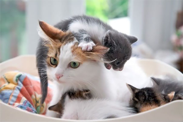 16 Animal Pictures That Perfectly Depicts What It's Like To Be A Parent. #9 Is The Best Ever.