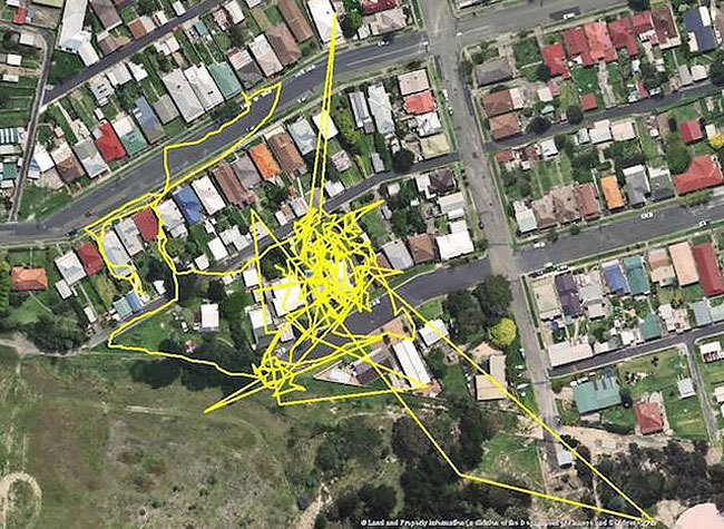 GPS Trackers Show Us What Our Cats Do When They Go Out At Night