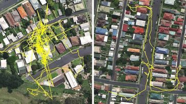 gps-trackers-show-us-what-our-cats-do-when-they-go-out-at-night