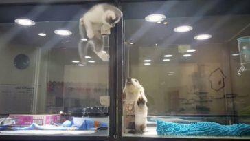 kitten-puppy-alone
