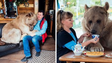 russian-couple-lives-adopted-bear