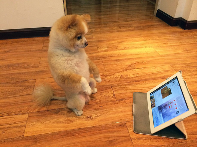 15 Funny Photos Of Dogs Standing Awkwardly. The Last One Is The Best Ever.