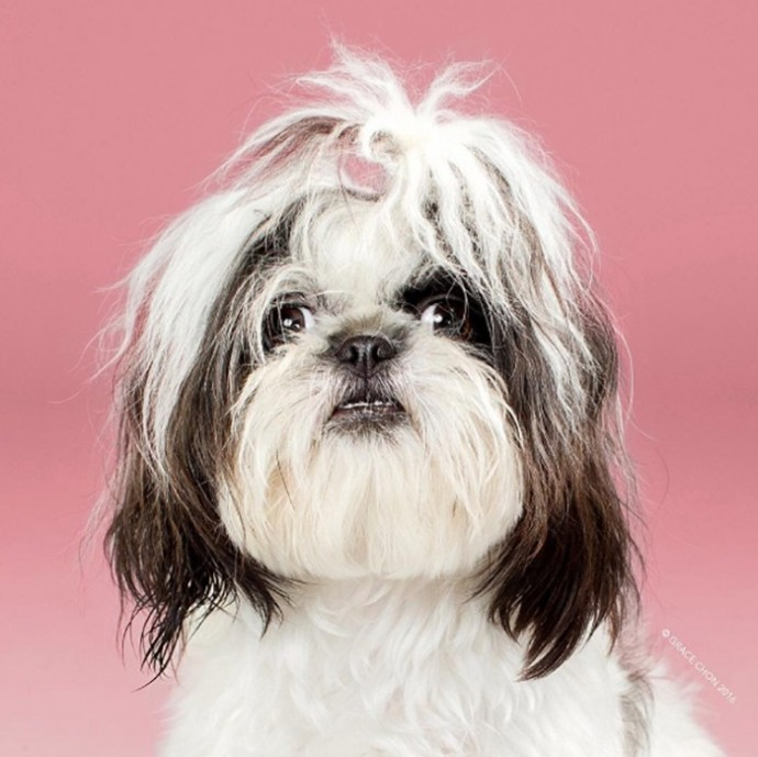 How Dogs Change Before And After Their Haircuts