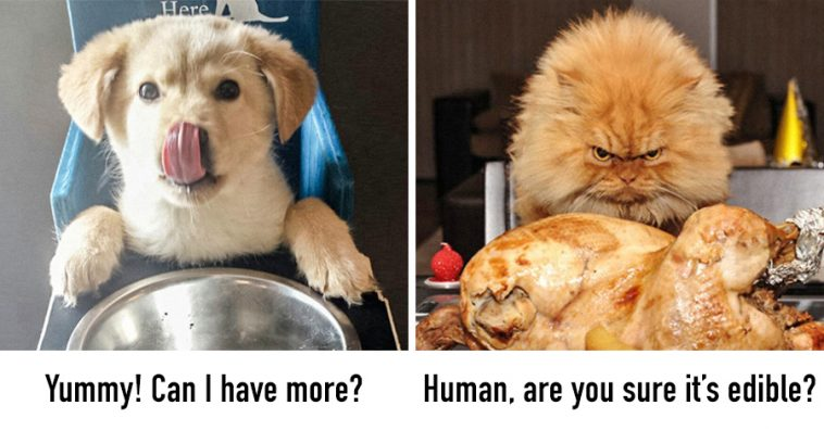 13-hilarious-photos-proving-dogs-cats-come-two-totally-different-worlds