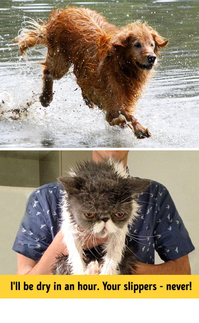 13 Photos Proving That Dogs And Cats Come From Two Totally Different Worlds