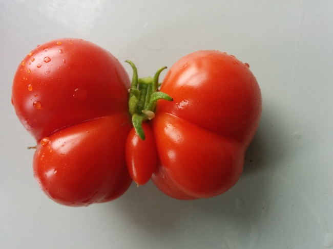 are tomatoes fruits or vegetables weird fruits