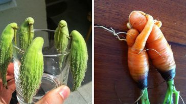 funny-vegetables