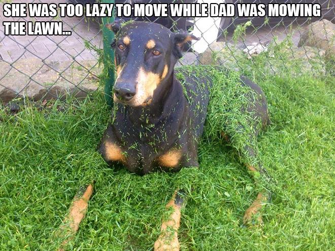 Hilarious Random Acts Of Laziness Cracked Me Up - 28 hilarious random acts of laziness 4 cracked me up