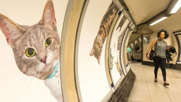 adverts-london-station-replaced-cat-pictures-2-weeks