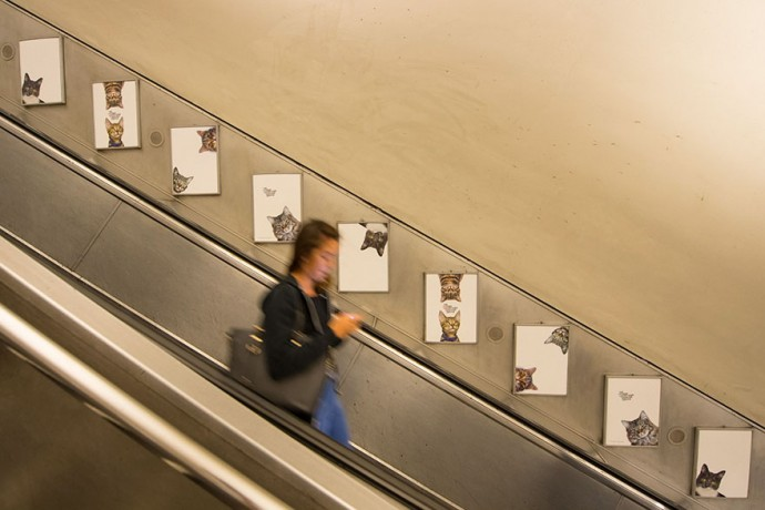 All Adverts In This London Station Have Been Replaced With Cat Pictures For 2 Weeks