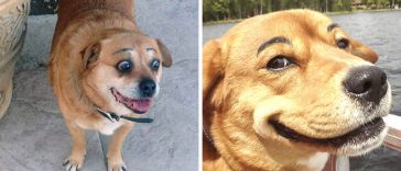 dogs-eyebrows