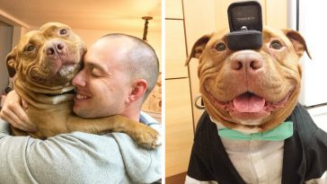 rescue-dog-cant-stop-smiling-saved-helps-couple-find-love