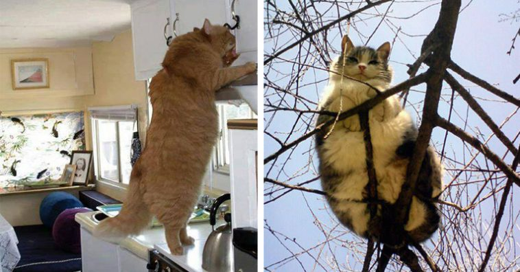 14-huge-cats-clearly-not-kittens-anymore