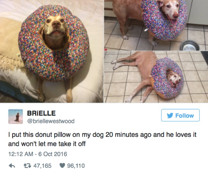24 Hilarious Picture Tweets That Will Make You Laugh No Matter What