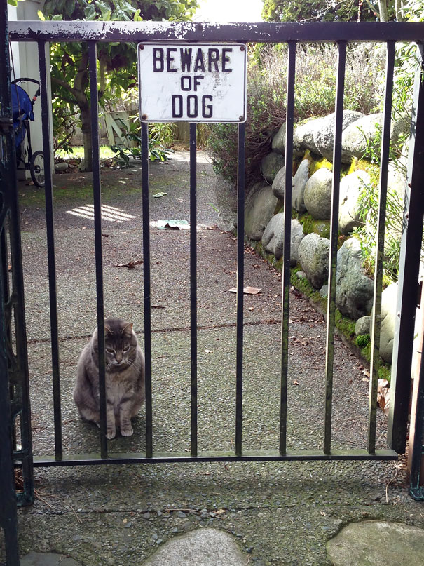 "24 ""Vicious"" Dogs That Make The ""Beware Of Dog"" Sign Totally Useless"