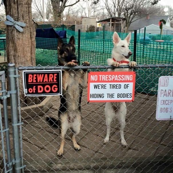 """24 """"Vicious"""" Dogs That Make The """"Beware Of Dog"""" Sign Totally Useless"""