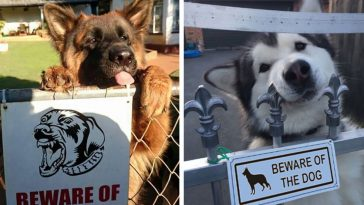 24-vicious-dogs-that-make-the-beware-of-dog-sign-totally-useless