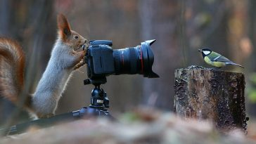 photographer-captures-adorable-squirrel-photoshoot-ever