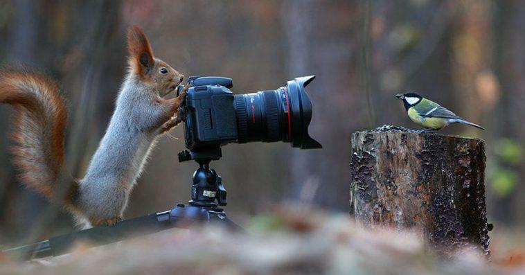 photographer-captures-adorable-squirrel-photoshoot-ever