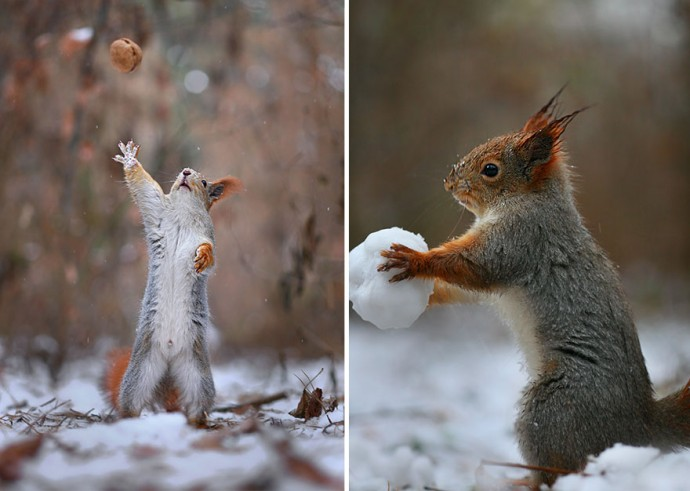 Photographer Captures The Most Adorable Squirrel Photoshoot Ever
