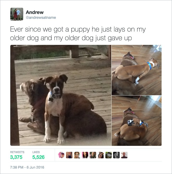 16 Of the Most Hilarious Tweets About Dogs