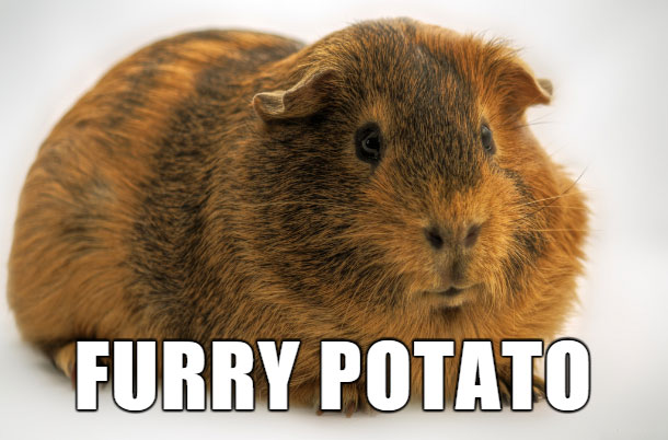 18 Hilarious Brand-New Animal Names That Are So Much Better Than The Originals