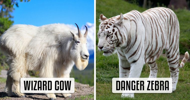 Hilarious BrandNew Animal Names That Are So Much Better Than - 18 hilarious brand new animal names that are so much better than the originals