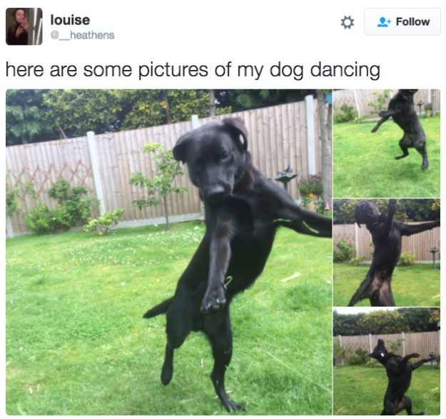 20 Photos To Remind Us That Dogs Are Just Perfect And Majestic Creatures