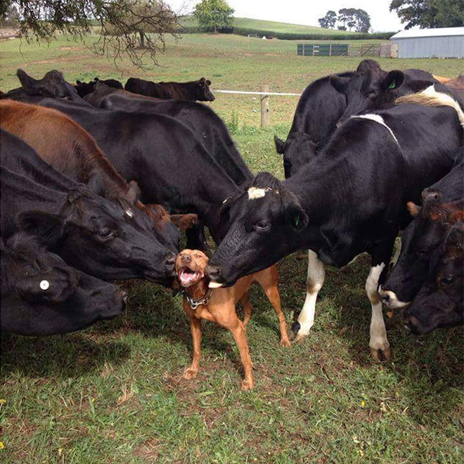 21 Adorable Animals Having The Best Day Of Their Entire Life