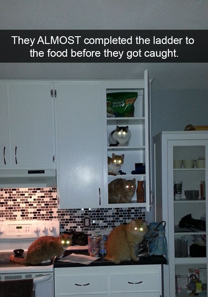 24 Hilarious Cat Snapchats That Will Make Your Day Instantly Better