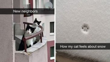 24-hilarious-cat-snapchats-that-will-make-your-day-instantly-better