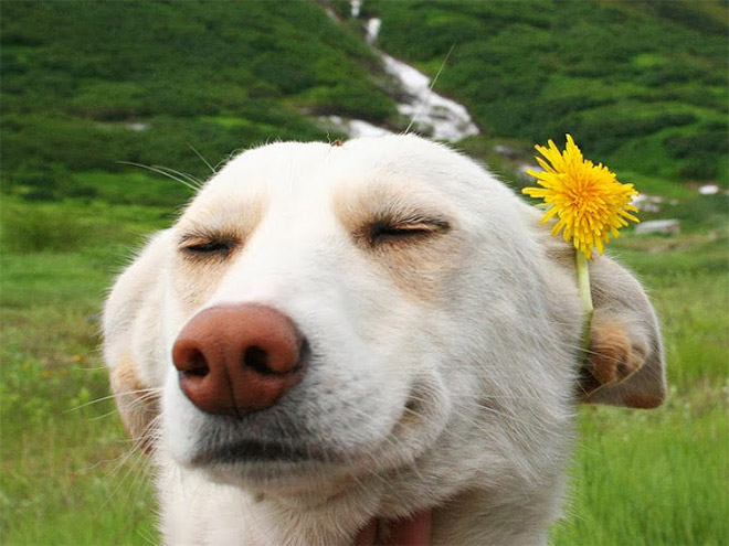 25 Adorable Animals Having The Best Day Of Their Life
