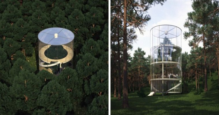 architect-builds-translucent-home-around-tree-forest-kazakhstan